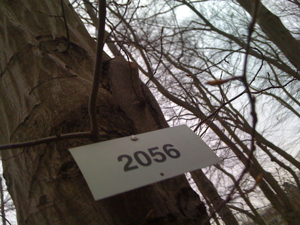 Baum Nr. 2056 (Botanischer Garten Berlin Dahlem)