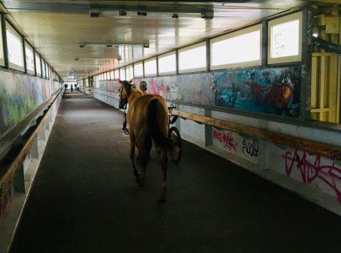 Ein Pferd im S-Bahnhof Ahrensfelde
